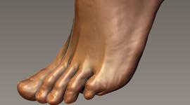Foot Study | Zbrush