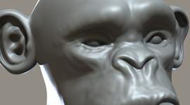Monkey | Base Mesh